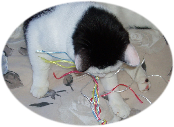 Cat floss - handmade string toy for feline oral hygiene