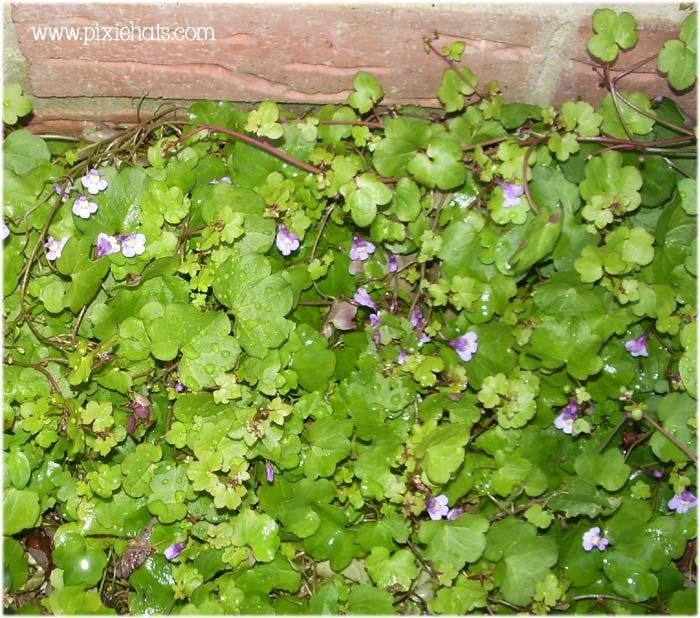 wild flower floor covering - dainty purple weed
