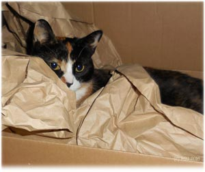 Cats in packing paper!