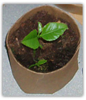 recycled seedling paper pot